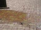 Abflußreinigungsaktion am Brunnen vor der alten kath. Kirche am 30.05 (2)
