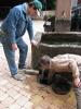 Abflußreinigungs- und -reparaturaktion am Brunnen 30.05.2015