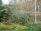 Ebertplatz-Maulbeerbäume-vorher-P1010295