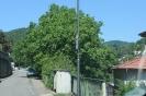 15.08.03-Ziegelhausen-Wasserbuckel#2F242