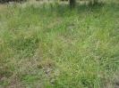 Wildschwein-Verwüstungen im oberen Teil des Hirtenbrunnenwegs 10.06 (4)